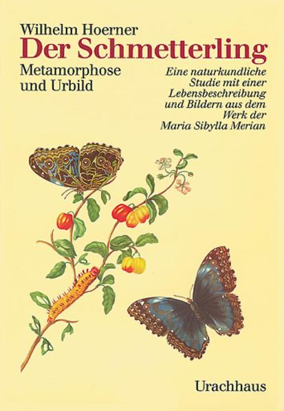 Der Schmetterling als Buch (gebunden)