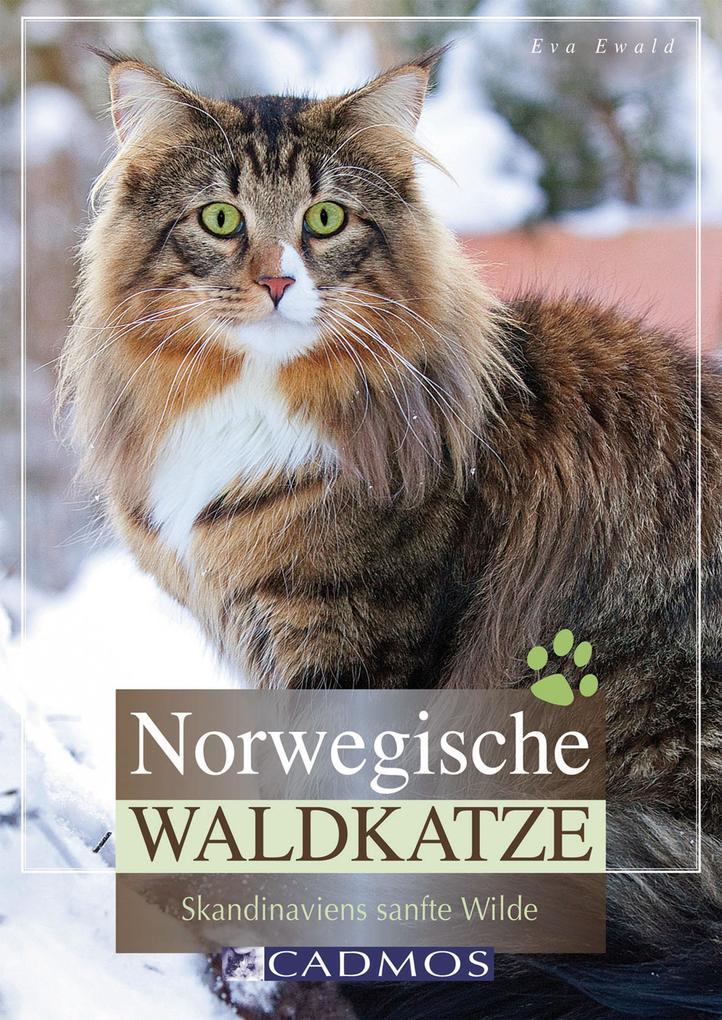 Norwegische Waldkatze als eBook epub
