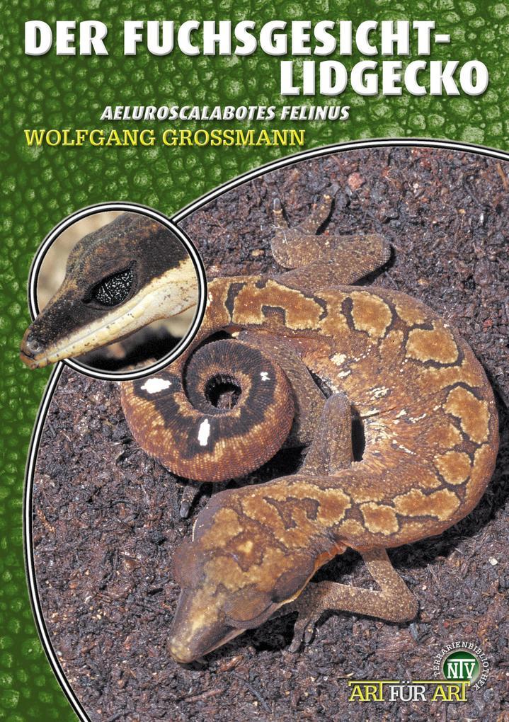 Der Fuchsgesicht-Lidgecko als eBook epub