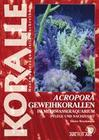 Acropora-Geweihkorallen im Meerwasseraquarium