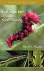 Caterpillars of Eastern North America: A Guide to Identification and Natural History als Taschenbuch