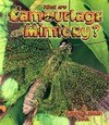 What Are Camouflage & Mimicry?