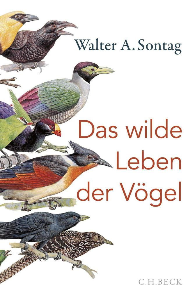 Das wilde Leben der Vögel als Buch (gebunden)