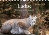 Luchse - Europas größte Katzen (Wandkalender 2021 DIN A4 quer)