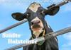 Sanfte Holsteiner (Tischkalender 2021 DIN A5 quer)