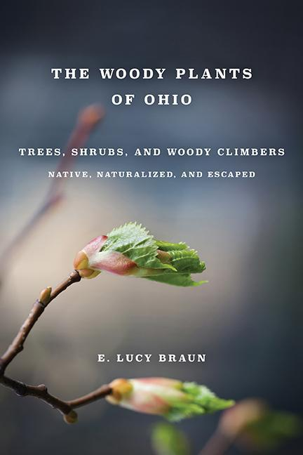 Woody Plants of Ohio: Trees, Shrubs and Woody Climbers Native, als Taschenbuch