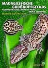 Madagassische Großkopfgeckos
