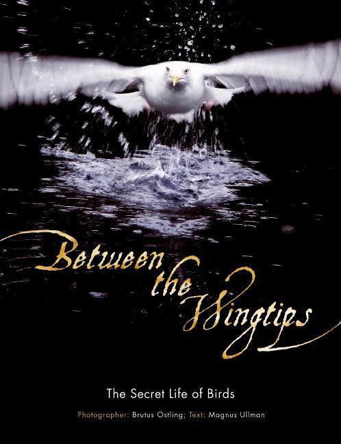 Between the Wingtips: The Secret Life of Birds als Buch (gebunden)