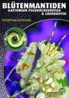Blütenmantiden (Gattungen Pseudocreobotra & Creobroter),